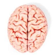Положительное влияние физических упражнений на мозг