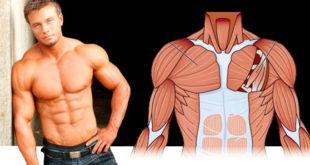 качаем грудные мышцы в домашних условиях
