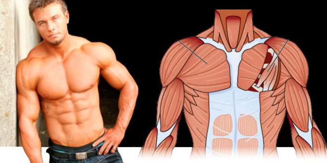 Как быстро накачать грудные мышцы в домашних условиях мужчине программа тренировок