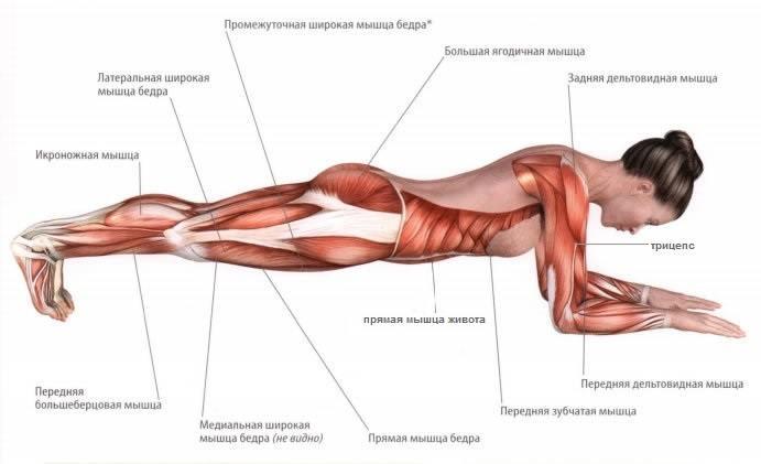 Мышцы которые вовлечены в работу