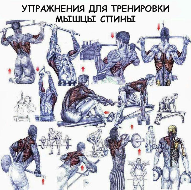 Какие упражнения для каких групп мышц фото